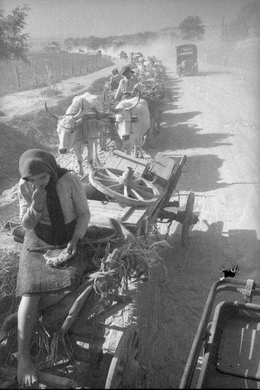 битва за сталинград10 эвакуация