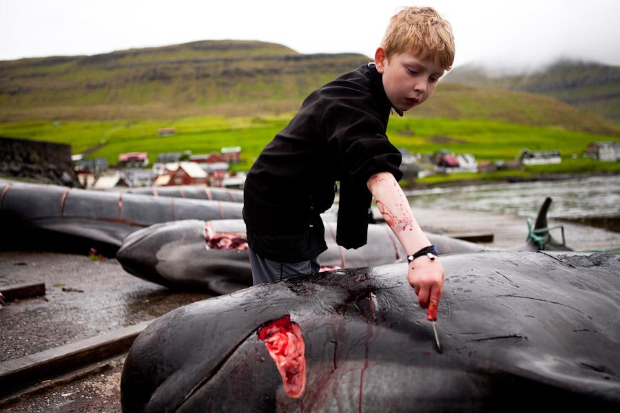 дания дельфины10