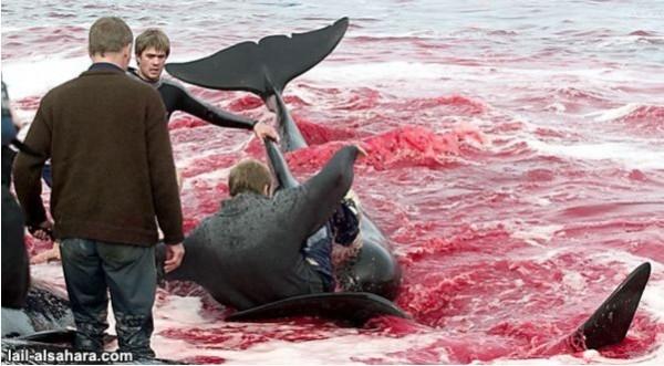 дания дельфины5