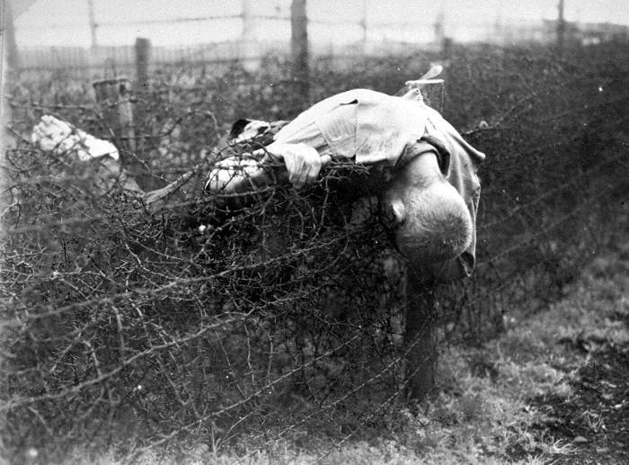 Труп узника концлагеря Лейпциг-Текла на колючей проволоке. Лейпциг-Текла (Leipzig-Thekla) был отделением, или «сублагерем» Бухенвальда. 1945г.