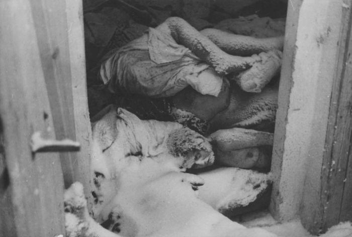 Занесенные снегом тела узниц концлагеря Освенцим Время съёмки январь 1945г