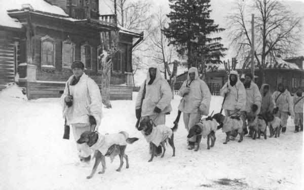 sovetskie-boevye-sobaki-v-zimnih-nakidkah