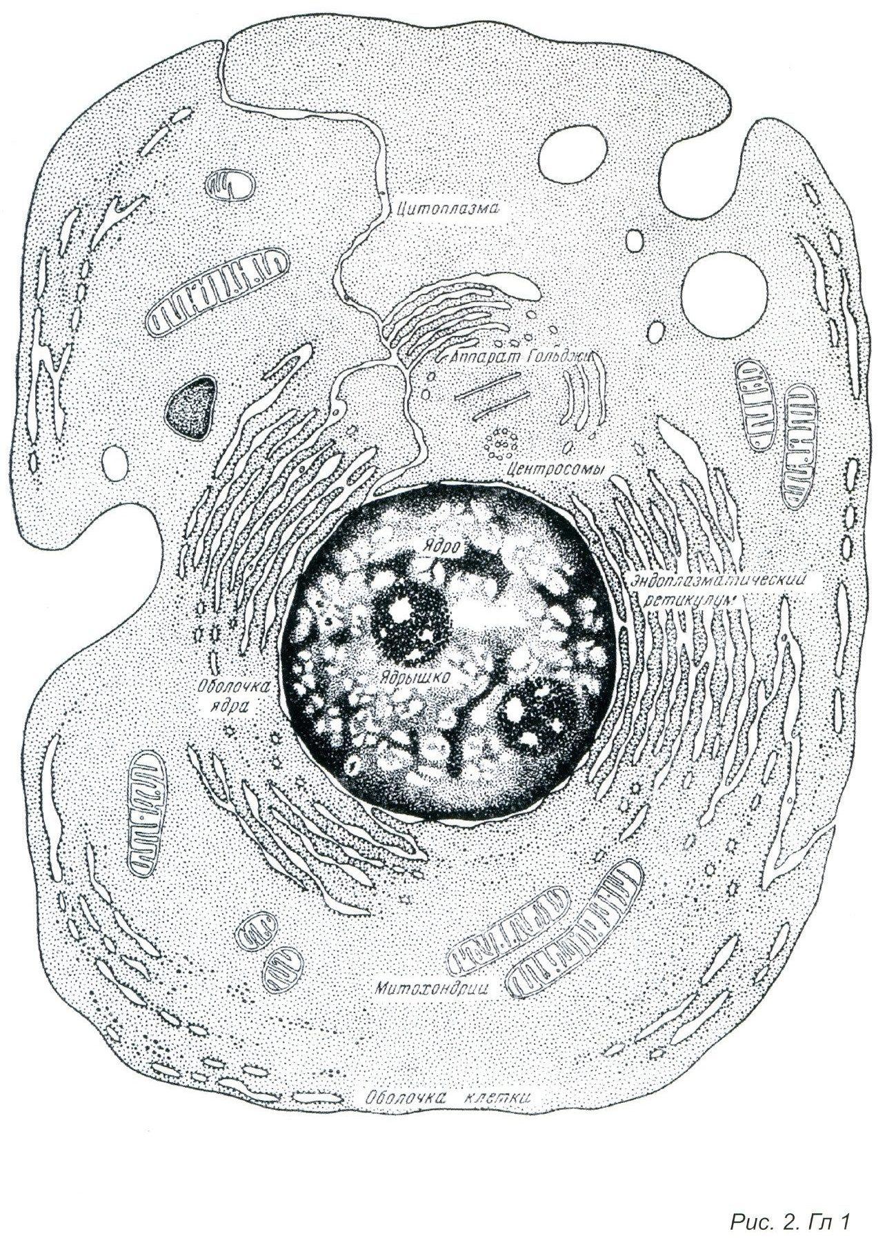 ноосфера0010
