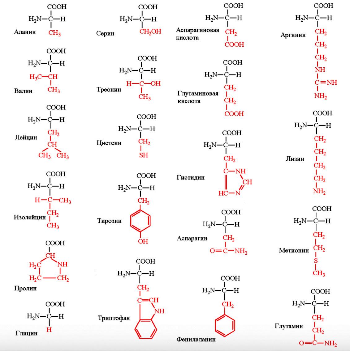 Рис.1 Строение и название аминокислот
