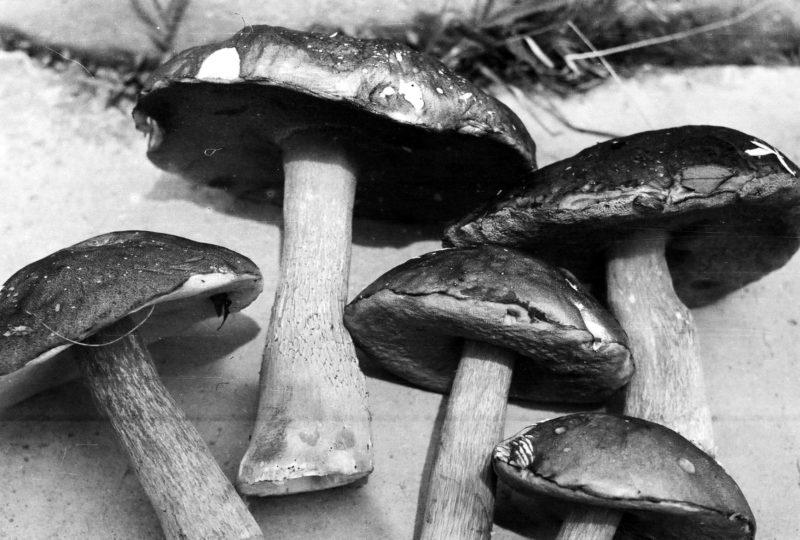 Надеждинские грибы Советского периода!